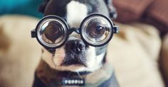 19 DIY Projects for Dog Lovers - Barkpost