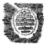 illustration of underground yellow jacket nest