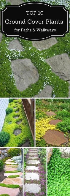 If you are looking for a way to beautify your pathway, check out these 10 plants that'll thrive there easily. #GardeningIdeas #landscaping
