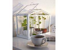 Socker Greenhouse