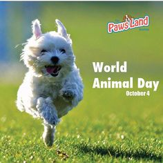 It's all about animals on October 04 2016  the World Animal Day (WAD). This is an international awareness day and puts the harm of animals caused by humans into the centre of attention. Often farm animals and pets are kept under bad conditions and neglected. It was Heinrich Zimmermann a German-Jewish author who made an application to initiate a day dedicated to animals in 1931 on the convention of ecologists in Florence. He had fought for animal rights for many years. His suggestion had been…