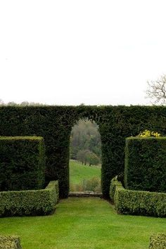 arch in the hedge!! divine! birds nesting the hedge! Make sure no trimming when birds are nesting!!