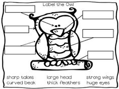The Groovy Teacher: FREE Owl Labeling!