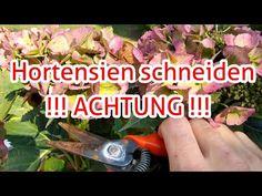 Curly Hair Styles, Youtube, Plants, Pipe Wrench, Handy Man, Toy, Slim, Planting Shrubs, Hydrangeas