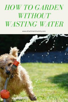 Gardening without wasting water - Dog Training Good Day Sunshine, Yorky, Water Waste, Dog Hacks, Creature Feature, Old Dogs, New Tricks, Dog Care, Dog Training
