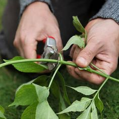 Inspirasjon – Min Oase Garden Living, Diy Wreath, Garden Inspiration, Garden Tools, Planters, Gardening, Christmas, Decor, Do Crafts