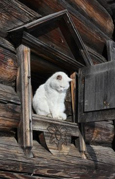 Country Cat ~……WATCHING THE KIDS JUMP OUT THE LOWER WINDOW ON TO THE HAYSTACK…….WE LOVED TO DO THAT ON THE FARM……..ccp