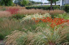 Beplantingsplan met rode tinten om het bedrijfsmerk Miele verder te benadrukken | ontworpen door GRASVELD Tuin- en Landschapsarchitecten Planting Plan, Perennials, Yard, How To Plan, Perennial Plant, Flowers, Plants, Om, Outdoors