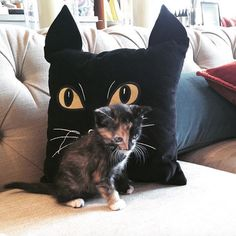 Our Halloween pillows are simply #purrfect this fall, don't you think? Click to shop our newest additions! #pbpet