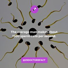 How much sperm does a man produce in a day? The average adult male produces about 290 million sperm cells a day. Facts About Guys, Education Information, Gernal Knowledge, Mind Blowing Facts, Intresting Facts, Mind Blown, Health Benefits, Things To Come, Learning