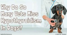Hypothyroidism in dogs is a condition in which the thyroid is unable to produce enough of the hormone thyroxine to meet the body's demands.