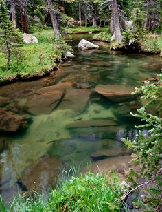 Actively feeding trout in a crystal clear stream in Rocky Mountain National Park. Trout Fishing Lures, Bass Fishing, Ice Fishing, Salmon Fishing, Saltwater Fishing, Fly Fishing Tips, Fishing Stuff, Fishing Tricks, Fishing Knots