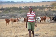 Kenya boy, 13, gains fame for protecting livestock from lions. Clever boy!