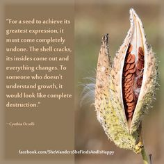 """For a seed to achieve its greatest expression, it must come completely undone. The shell cracks, its insides come out and everything changes. To someone who doesn't understand #growth, it would look like complete destruction."""