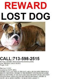LOST BULL-DOG ~ Katy, TX area ~ Please repin to spread the word.