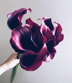 Цветы говорят многим больше чем мы сами. Иногда можно молчать и так все будет понятно.  Интересно кто как видит эти цветы? В чем они признаются или чего желают?  Цена: 1750 руб - 7 стеблей