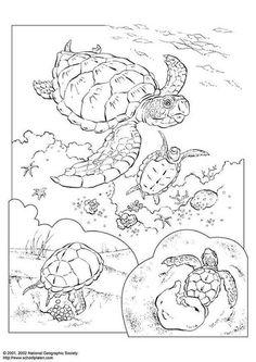 sea turtle coloring page zeeschildpad