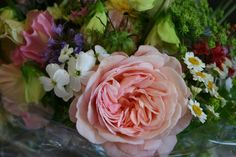 my favourite rose this year is Shropshire Lad - here's one - do you see why?…