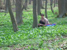 Bärlauch im Wald bei Neuhaus