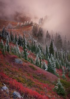 Transition by Bryan Swan Late fall in Mount Rainier National Park, Washington state, one of my favourite places. All Nature, Amazing Nature, Images Lindas, Terre Nature, Beautiful World, Beautiful Places, Landscape Photography, Nature Photography, Mount Rainier National Park