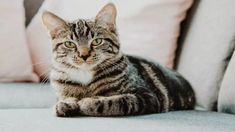 Best Cat Food Reviews - We Talk about Cat Food