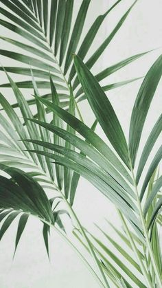 Indoor Tropical Plants for Sale . Indoor Tropical Plants for Sale . Benefits Of Indoor Plants, Indoor Tropical Plants, Indoor Palms, Best Indoor Plants, Palm Plants, Foliage Plants, Art Vert, Plant Background, Tropical Background