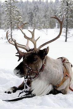 russian christmas | WINTER WONDERLAND                                                                                                                                                      More