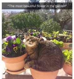 most beautiful flower indeed | TrendUso #flower #flowers #garden #gardens #pot #pots #cat #cats #cute #adorable #CutestPet #cutest #pet #pets #animal #animals #funny #hilarious #humor #humorous #humour #meme #memes #memesdaily #lol #wtf #omg