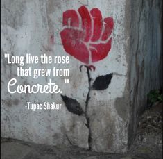 """Did you hear about the rose that grew from a crack in the concrete? Proving nature's laws wrong, it learned to walk without having feet."" This quote reminds me of my #littlefighter #fightlikeagirl #shegotguts #Tupac #poetry #quote #mommyblogger"