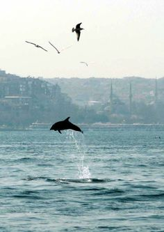 <3 dolphin and seagulls- istanbul