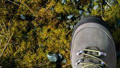 #Ushuaia moss - Setours ©