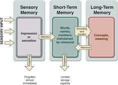Is Pavlov's Dog a example of long term memory?