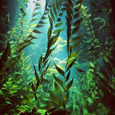 Kelp, kelp, kelp!
