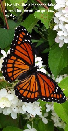 Live life like a Monarch, take a rest but never forget how to fly.