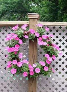 petunia living wreath/ I have seen a lot of these living wreaths I def need to do!!