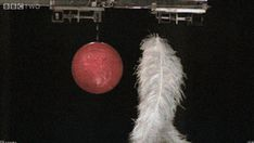 When a feather and a bowling ball are dropped in a vacuum, they hit the ground at the same time. #science #gravity