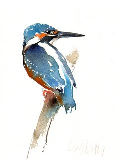 kingfishercrop You are in the right place about Birds Drawing illustration Here we offer you the mos Watercolor Paintings Nature, Watercolor Pictures, Watercolor Projects, Watercolor Artists, Watercolor Bird, Watercolor Animals, Watercolor Techniques, Watercolours, Art Aquarelle