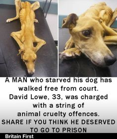 I think this man should a go to prison and b no longer be able to get any animals ever again