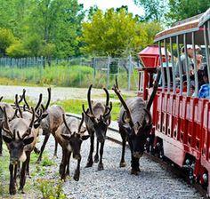 Wildlife World Zoo – Litchfield Park, Az