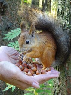 Ardillas Adorables Cosas Lindas Pinterest Squirrel - Student befriends campus squirrels then dresses them in the cutest outfits ever