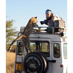 "A leopard leaps onto a Land Rover for his big close up. Sergey Kotelnikov was shocked when this overly camera-friendly young leopard jumped onto the roof of his vehicle in Namibia, close to the border with Botswana. Sergey Ivanov, who snapped the photo from an adjacent vehicle, said: ""My friend was scared. I was frightened, too, even though I was on the roof of the other car, as you expect it to begin attacking. But we soon relaxed when we realised that this big kitten was just playing."""