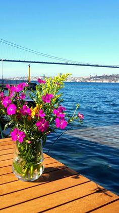 İstanbul Beylerbeyi Istanbul Turkey, Story Ideas, Illusions, Nice, Plants, Travel, World, Places, Viajes