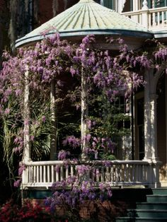 all covered with lilacs---Photographic Print: Savannah, Georgia, USA : Savannah Georgia, Savannah Chat, Georgia Usa, Historic Savannah, Garden Arbor, Garden Paths, Covered Pergola, Wisteria, Vacation Spots