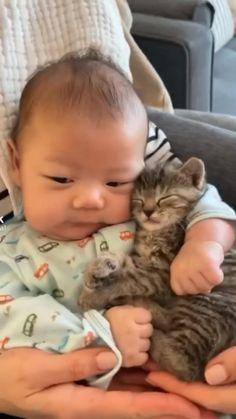 Baby Animals Super Cute, Cute Baby Cats, Cute Little Animals, Cute Cats And Kittens, Baby Dogs, Cute Funny Animals, Kittens Cutest, Babies With Dogs, Cute Baby Videos