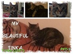 Please help us find Tinka the Cat missing in the RM8 area. For more details click http://j.mp/1GZI8Kv