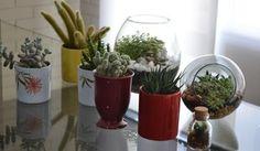 Aprenda a fazer um jardim no vidro  (Foto: Reprodução / TV Diário)