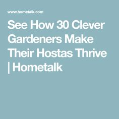 See How 30 Clever Gardeners Make Their Hostas Thrive | Hometalk