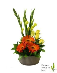 Send Bright Gerbera Rose and Gladioli Arrangement - Flowers NETPT010 - NetFlorist.co.za South Africa