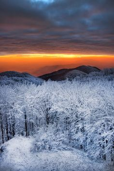 Sunset over snowy forest