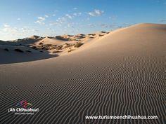 A 35 kilómetros al sur de Ciudad Juárez Chihuahua, se localiza el espectacular desierto de Samalayuca. La extensión de las dunas es de aproximadamente mil kilómetros cuadrados, un desierto de gran belleza y muy atractivo para los visitantes por la movilidad de las dunas, ya que la fuerza del viento eleva cortinas de una finísima arena blanca que al contacto con la luz del sol, se torna dorada, creando así un increíble espectáculo donde las arenas cambian de forma y de lugar…
